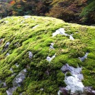 Deep moss, Shikoku - JPN