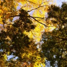 In the autumn, Mt.Mizugaki - JPN